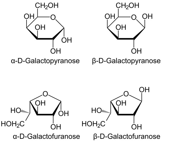 L Galactose Chemistry Galactose is a
